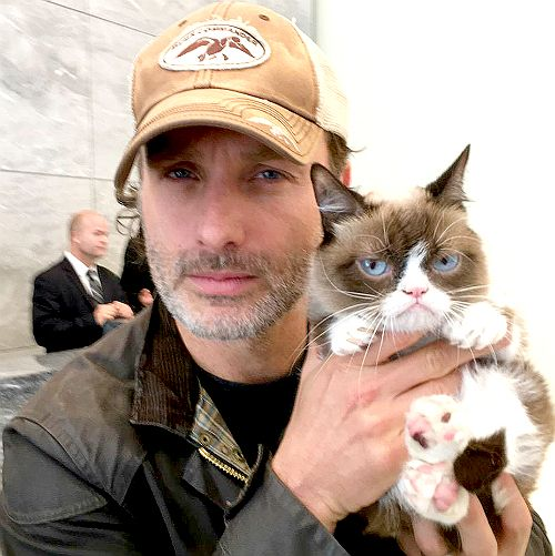 "ricky-grimes: "" ""Grumpy Cat and Andrew Lincoln give each other scowling tips in #NYC. #NoItAll (x) "" """