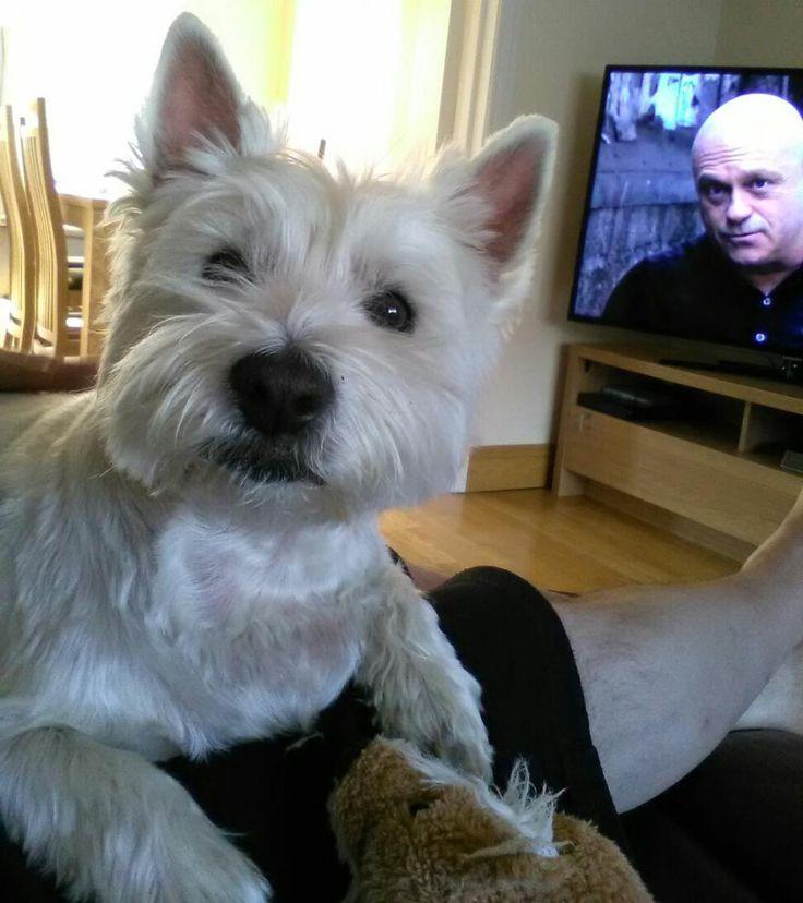 Ross Kemp photobombed my dog