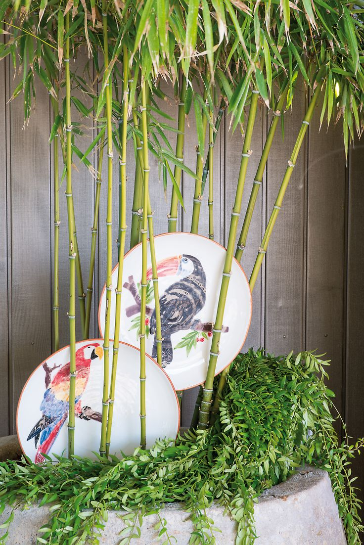 Plate Bird by Pfister, Summer Paradise, Indoor Ideas, Furnishing and Decoration Ideas, Decoration, Birds, Parrott and Toucan paintings