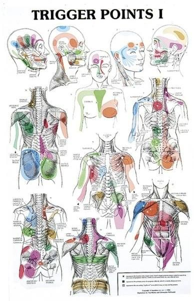 Trigger points chart at ART of Massage Phoenix come learn what trigger point massage can do to release lasting muscle tightness!
