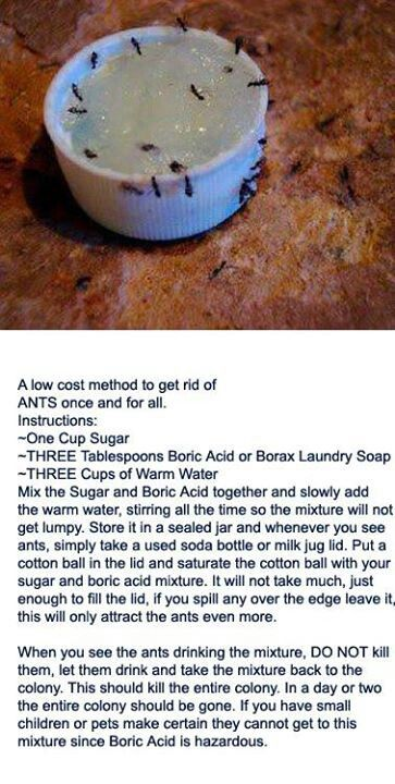 Ant killer - this actually worked! I have a whole box of Borax soap if anyone in SL needs some to get rid of their ants