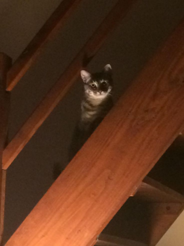 Whenever I feel like somebodys watching me and I look up.... http://ift.tt/2DMXhTe