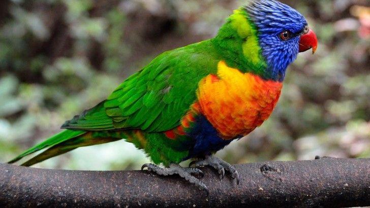 Parrot Bird Branch Feathers