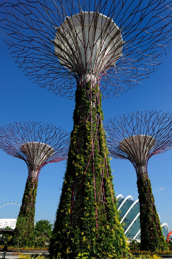 tree like vertical gardens singapore gardens by the bay by wilkinson eyre architects