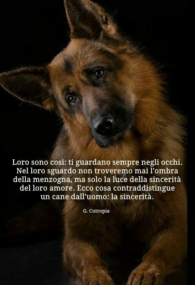 Megghiu Aviri Un Cani Amicu Chi N Amicu Cani Antico Proverbio