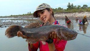 budidaya betutu di kolam terpal, cara budidaya ikan gabus gurame hias lele nila  patin, Pakan Ikan Betutu,