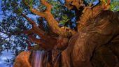 Tarzan - Discovery Island (Animal Kingdom)