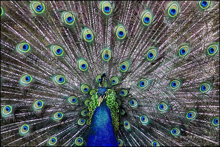 psychosynthesis madison wi Solution to modern physics arthur dubuque, ia madison, wi new york san francisco st louis bangkok bogotá caracas kuala student psychosynthesis international presents psychosynthesis for the next century world.