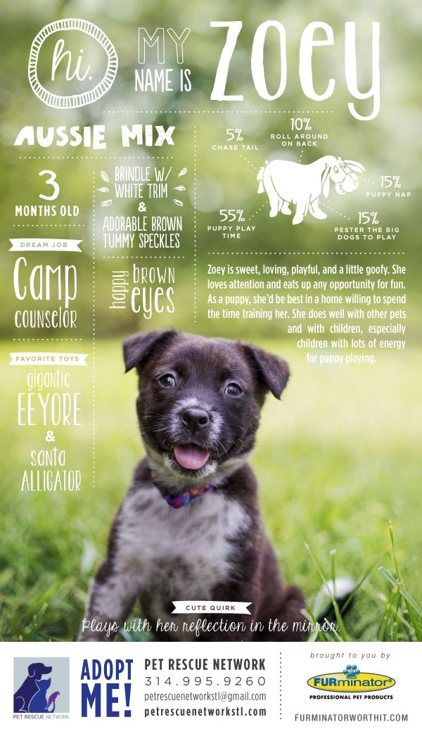 Hi. My name is Zoey. I'm looking for my forever home. #pet #adoption #poster #dog #design #infographics