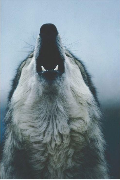 scary dog photography film Black and White wolf movie photo white horror b&w black filme dark bw bad and angry Lobo Perro darkness Afraid malo miedo blanco ...