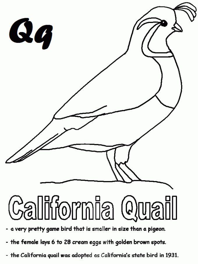 California Bird Quail Coloring Page