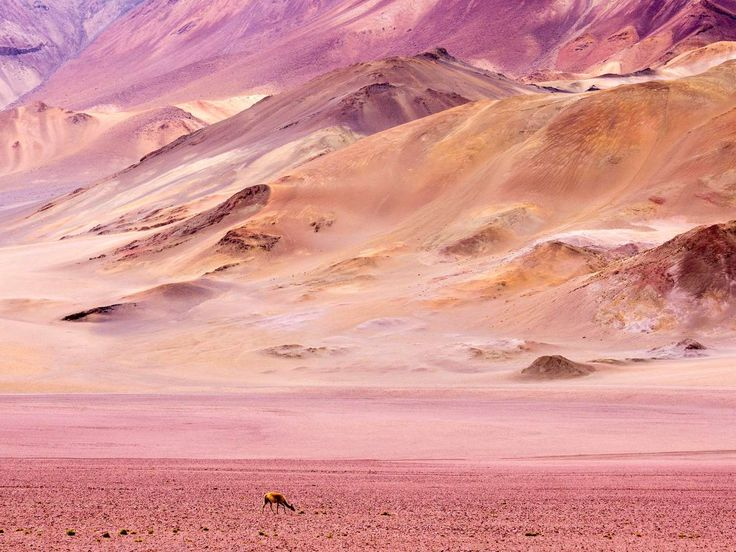 The entirety of Chile's Atacama Desert, a strip of land 1,000 miles wide, is virtually rainless. Ari... - Alamy