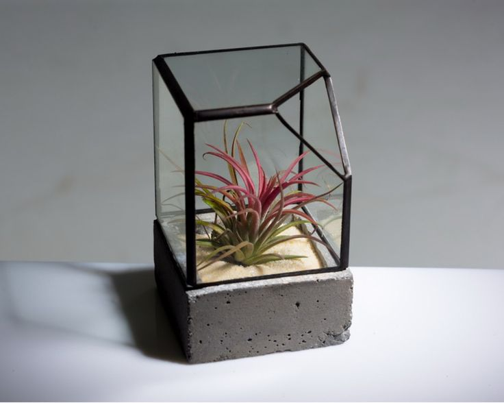 Manhattan Cube #Airplants #Greek #Design