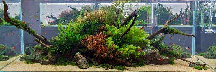 Aquascape styles and ideas - THE 2HR AQUARIST (With images ...