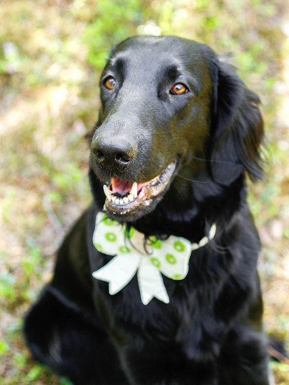 M - Dog Photo Prop - Dog Lover Gift - Pet Bow Tie - Gifts Under 20 - Dog Bow - Dog Accessories - Bows for Dogs - by Vicia Faba Design