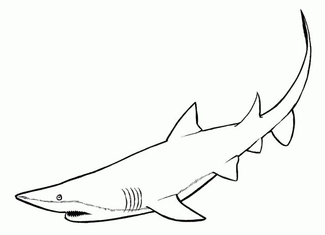 Shark free printable coloring pages educational