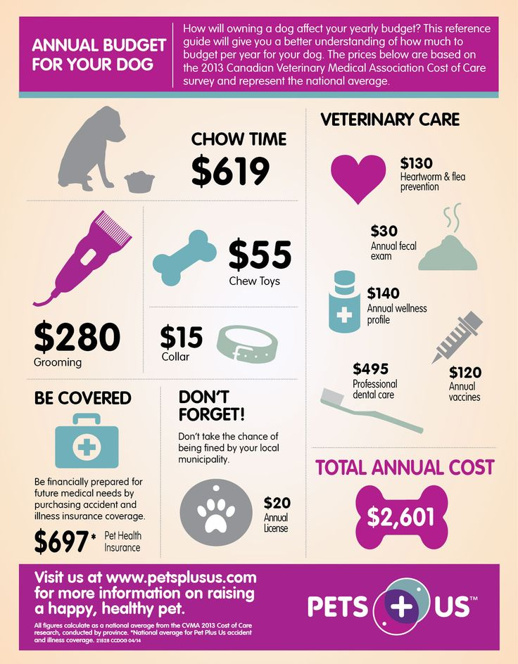 Annual budget for your dog pet infographics pinterest