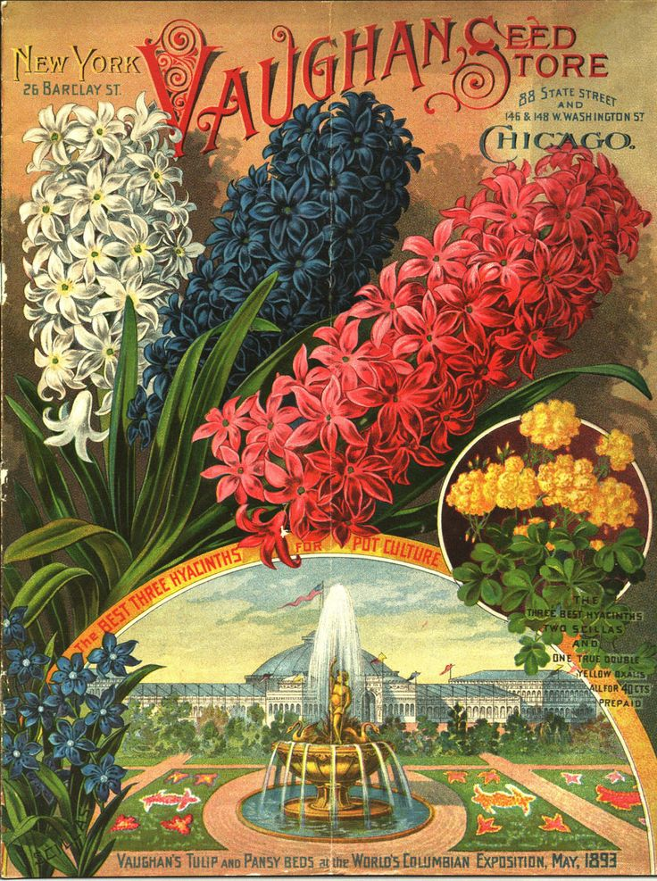 """From the collection at Andersen Horticultural Library. Nursery publications often tout major awards won by that company at world's fairs and other horticultural exhibitions. New York-based Vaughan's Seed Store – winners of """"the best three hyacinths for pot culture"""" at the World's Columbian Exposition in Chicago – issued the above in autumn 1893."""