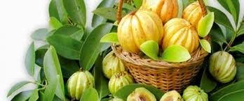 Garcinia Cambogia direct 0102971712 ) Has Been clinicly Proven  Deliver 4 Times More Weight Loss Than Diet and Exercise Alone  www.losskilo.blogspot.com/