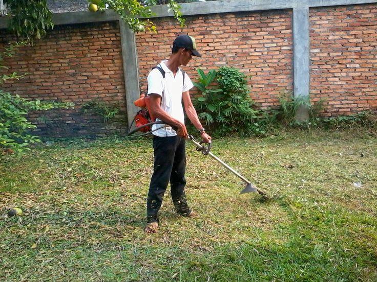 Jual Rumput Gajah Mini   Pasang Rumput Gajah Mini   Jasa Pasang Rumput Gajah Mini   Tukang Taman Murah   Tukang Rumput Gajah Mini    ~ Tukang Taman   Jasa Tukang Taman Murah   Jasa Pembuatan Taman   Jual Tanaman Hias   Jual Rumput