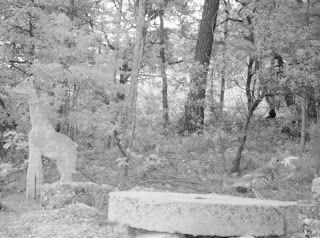 Wild Wood en Provence: thrush