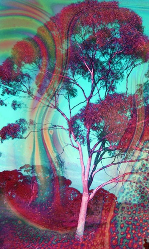 acid, lsd, and tree image