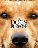 A Dog's Purpose izle | 2016 Yerli Yabancı Yeni Komedi Filmleri 2016 Türkçe Komedi Filmleri