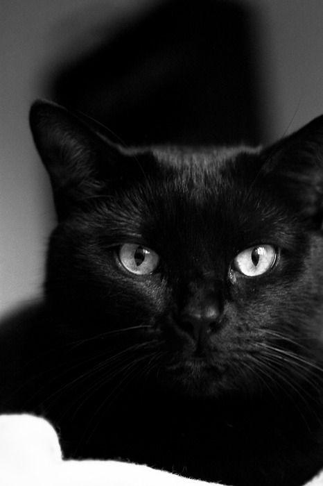 Gato negro + Viernes 13