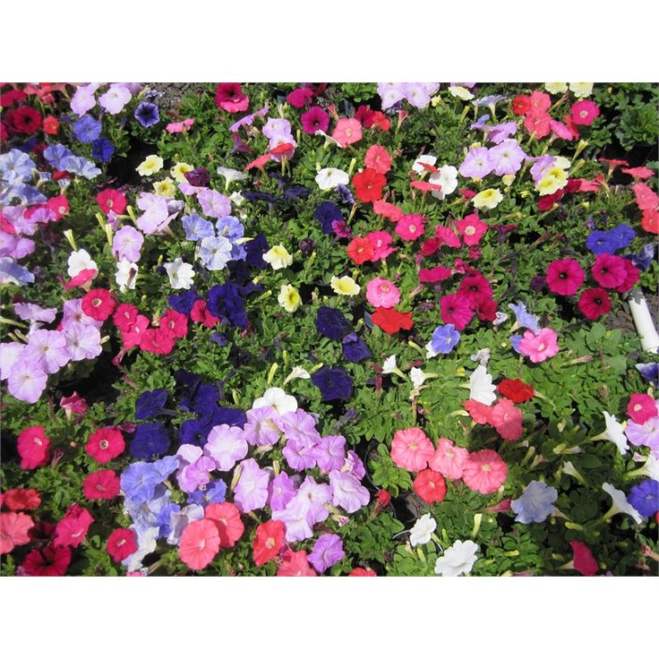 100mm Assorted Potted Plants Bunnings 576 needed. $1.97 each. Buy a couple each month.