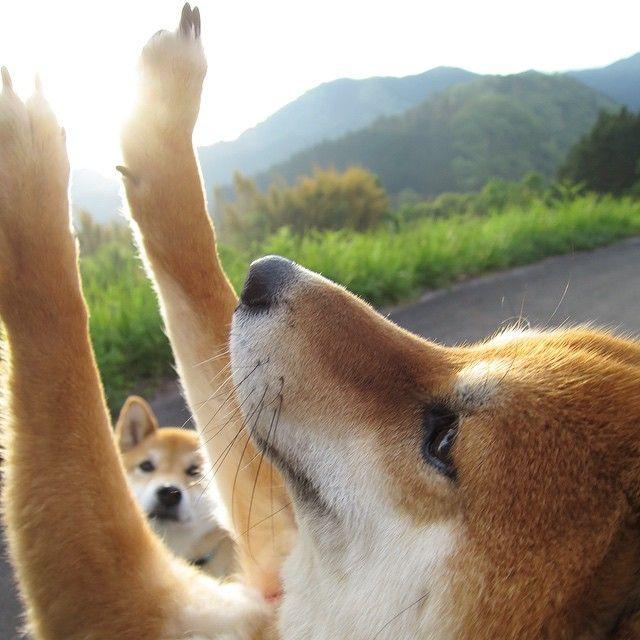 Feel the POWER! sasaq: @azuyamamama48 | Websta (Webstagram)