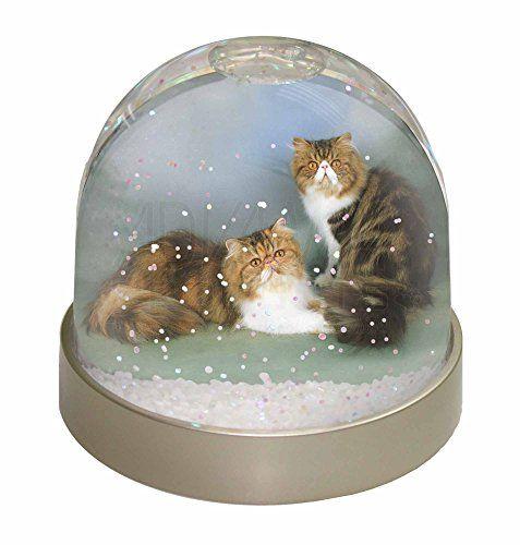 Tabby écaille chats persans Globe de neige de dÎme Wate... https://www.amazon.fr/dp/B005OWHZDO/ref=cm_sw_r_pi_dp_09NzxbC22SPG2