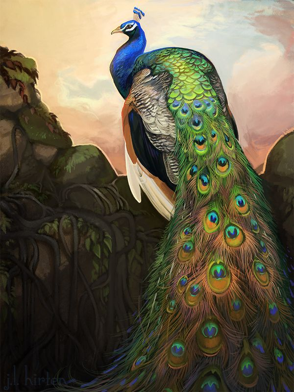 Pavo cristatus by CoyoteMange | art and cool stuffi ...