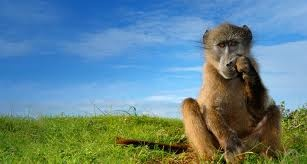 """""""Baviaanskloof"""" means """"Valley of the Baboons"""""""