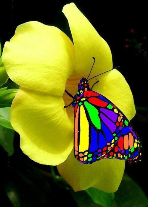 rainbow butterfly  Must be a trade off for that beauty.  it must be in an excruciatingly hot climate.
