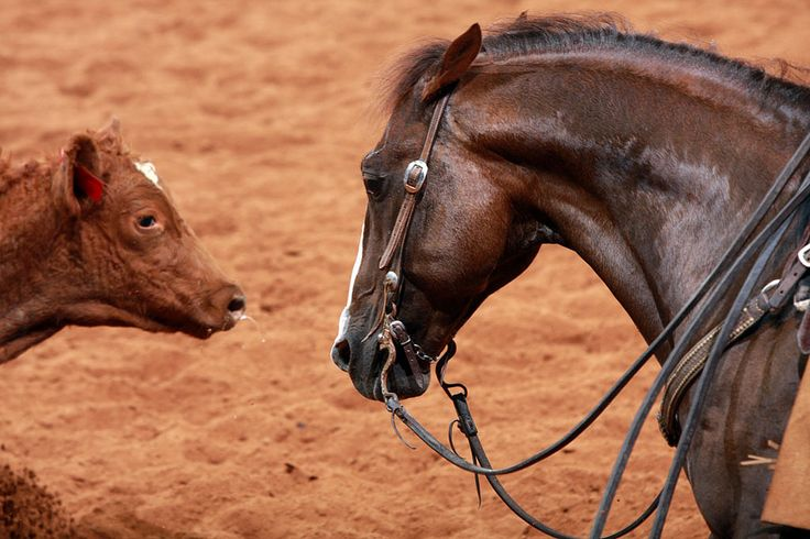 Purchasing Your First Cutting Horse – America's Horse