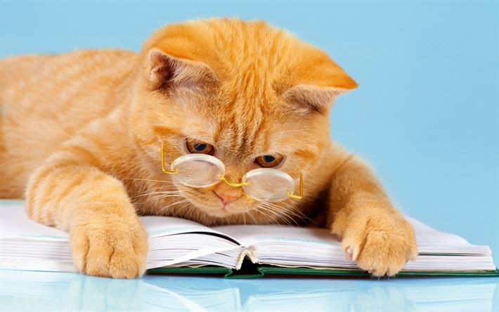 Download wallpapers red cat, education concepts, scientist, pets, science concepts, clever cat