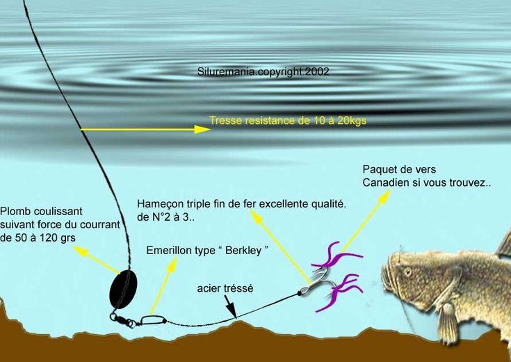 SILUREMANIA (la pêche sportive du silure en meurthe et moselle)