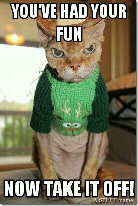 The Dressed Christmas Sweater | Kitty Stuff | Cats, Angry ...