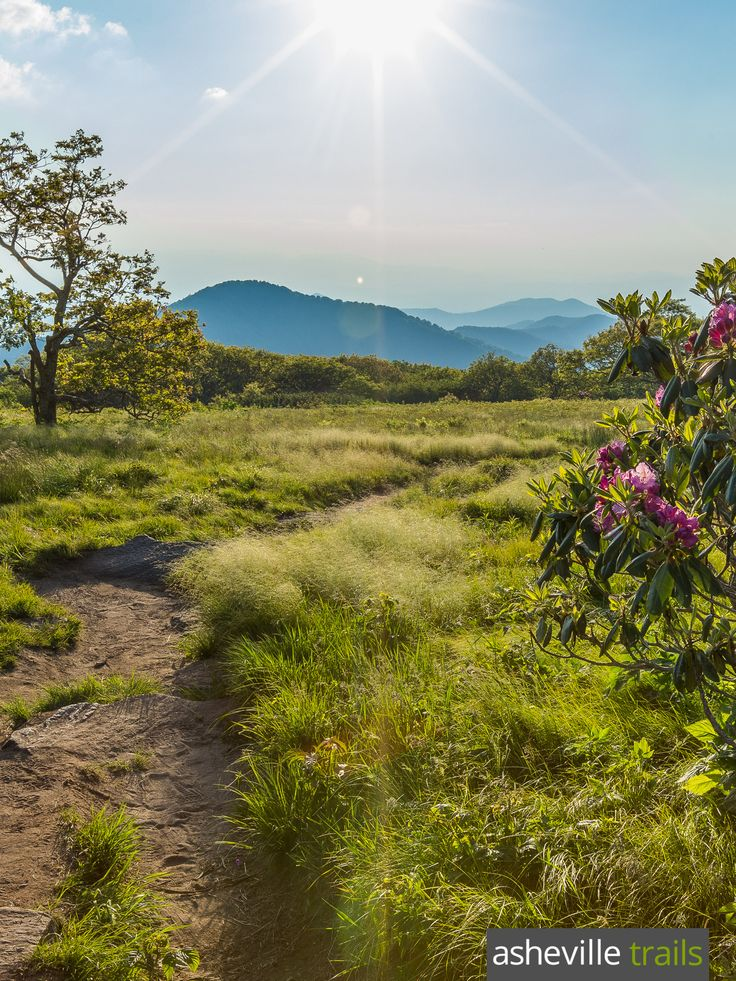 Hike the Craggy Gardens Trail, just off the Blue Ridge Parkway, to a grassy summit filled with blooming rhododendron, wild blueberries and wildflowers