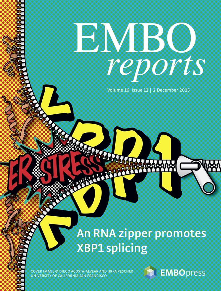 About the Cover — December 01, 2015, 16 (12) | EMBO Reports