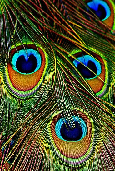 Eye-feathers of India-blue Peacock - 'The Eyes Have It'; by Rodney55, via Redbubble
