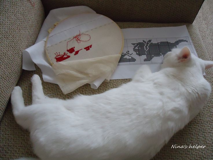 first embroidery block for my ambitious project...and my cat