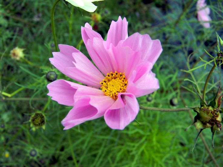 7 причин выращивать однолетние цветы / Flosium.ru