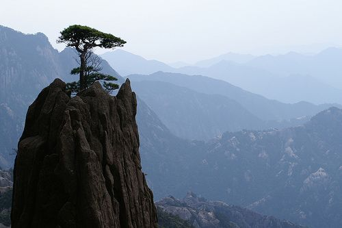 lonely pine, Photo: Anja Van Geert