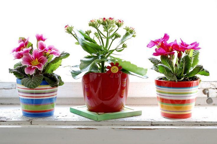 8 самых популярных комнатных растений