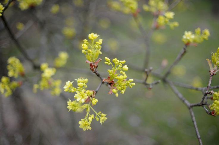ogrod.krakow.pl wiosna w ogrodzie