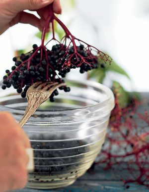 Sådan dyrker du hyldebær - Traeer og buske - Have - Isabellas