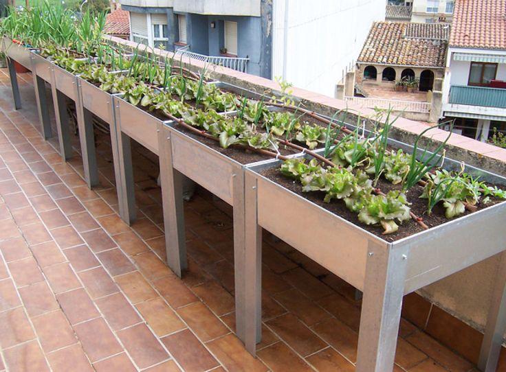 Mesas de cultivo.