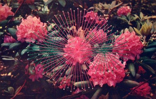 shaun kardinal, rhododendrons (for wendi).: Postcards, Art Embroidery, Embroidery Shaunkardin, Aim Particulièr, Shaun Kardin, Beautifuldecay Artists, Collage, Flowers, Design