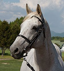 Silver Charm, winner of the 1997 Kentucky Derby and Preakness Stakes (both gr. I), is returning to Kentucky to retire at Old Friends near Georgetown after serving stud duty in Japan since 2005.